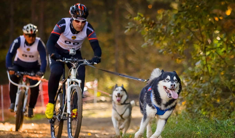 велосипеды, спорт, хаски, велоспорт,