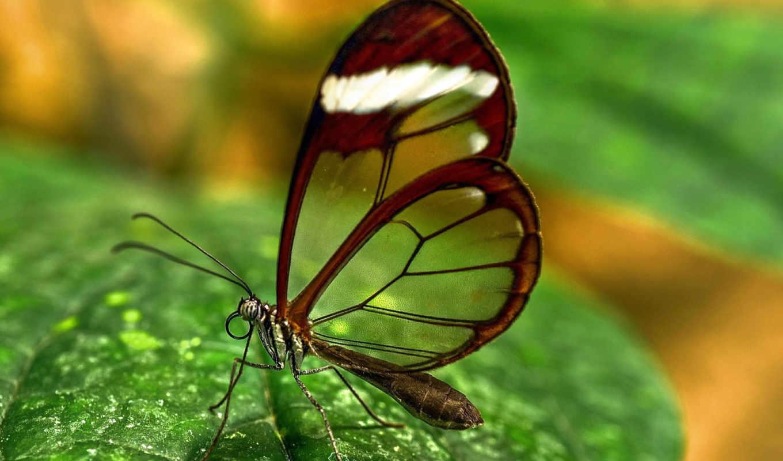 butterfly, puntos, votos, transparent, para,