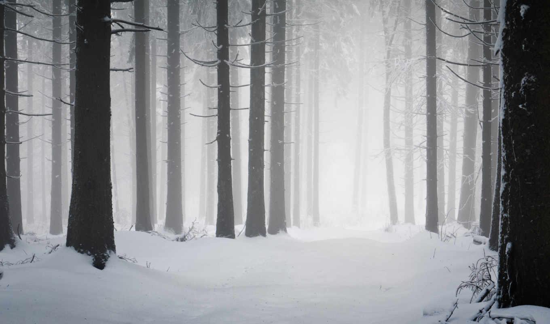 снег, лес, winter, иней, природа, холод, зимняя,