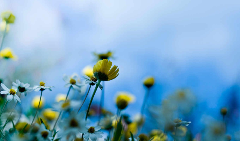 цветы, широкоформатные, заставки,