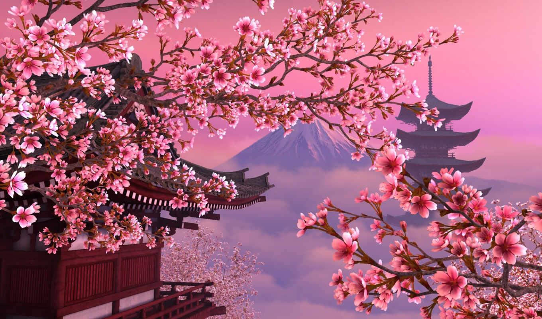 Сакура, япония, розовое, красиво, японии,