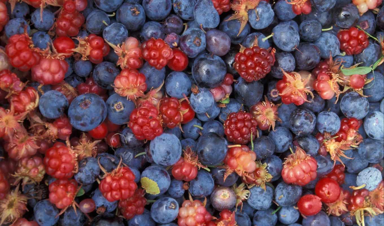 ягоды, berries, лесные, desktop, еда, wild, free, alaska, картинка, author,