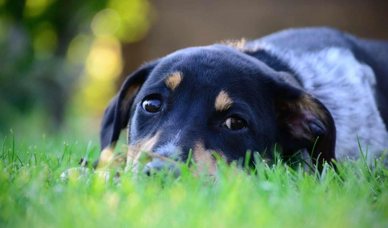 animal, лежит, животные, цветы, греется, широкоформатные, собака, трава, страница, морда, planet, sun, стебель,