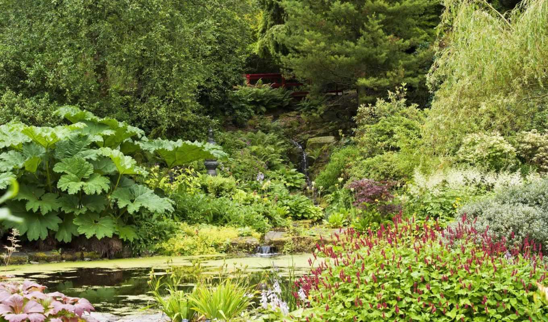 кусты, природа, дома, города, сады, пруд, парки, страница, марта, desktop,