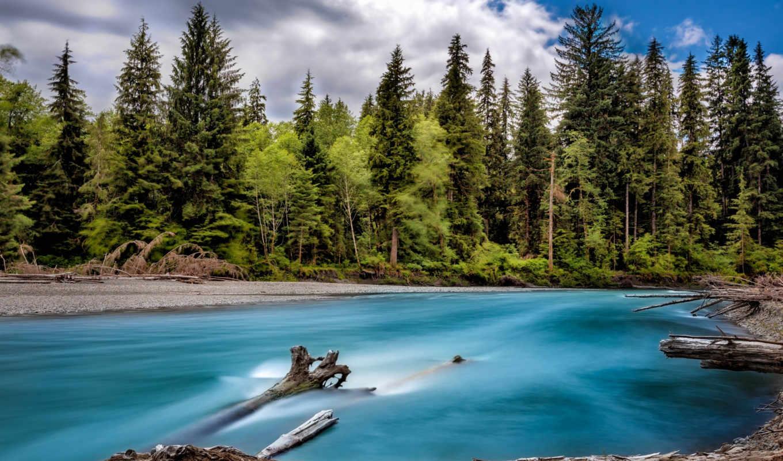 washington, usa, state, деревя, лес, река, берега, , природа,