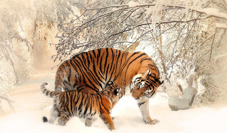 tigre, cachorro, cheap, fondos, nieve, tigres, elviajeroazul, top,