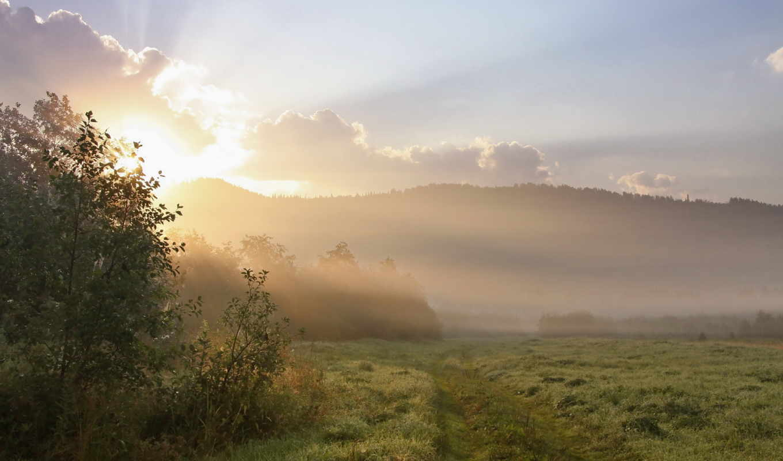 утро, поле, туман, trees, трава, sun, природа, холмы, роса, landscape,