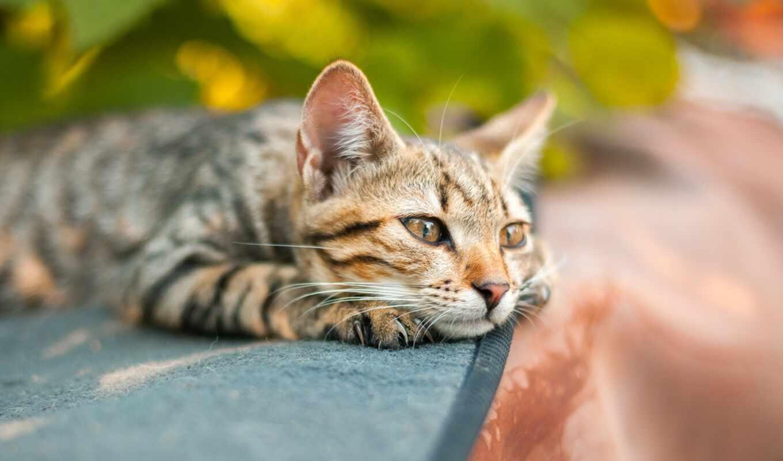 pet, кот, christchurch, vet, запах, который, два, scare, animal
