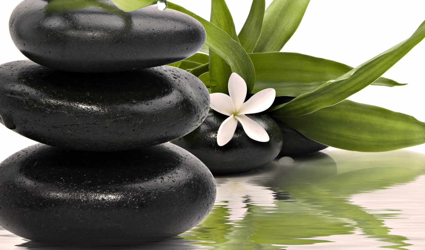 spa, with, zen, stones, nature, plants, со, videos, black, water, leafs, bamboo, life, still, černé, cena, широкоформатные, czk, kameny, květem, stone, стока, video, рѕр, obraz,