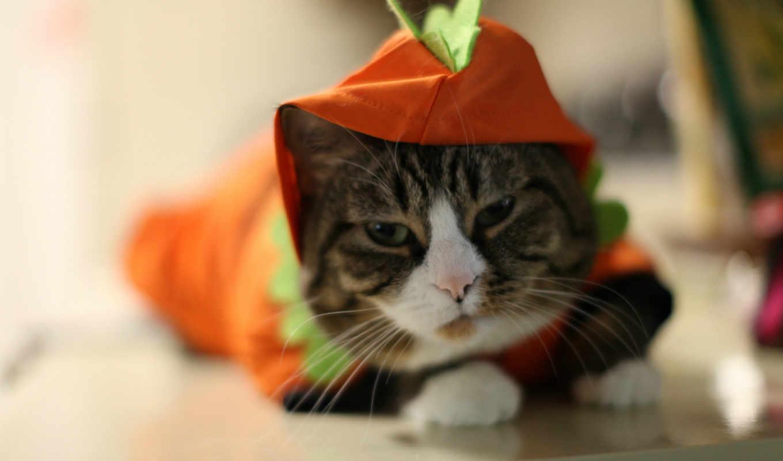 обои, кот, кошки, смешно, фото, животные, cat, хит