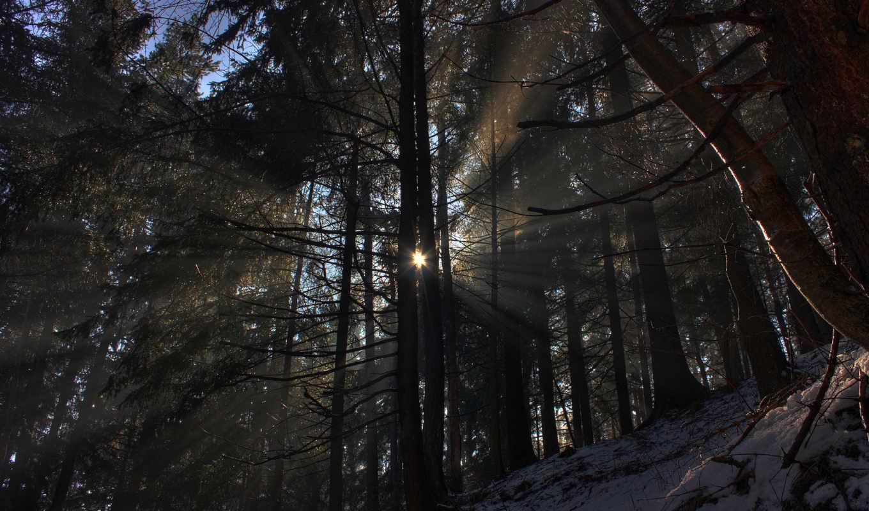 лес, природа, деревья, снег, солнце, лучи, зима, свет, света, луч,