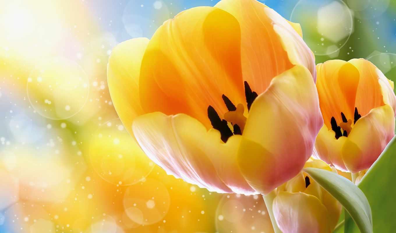 тюльпаны, цветы, бутон, yellow,