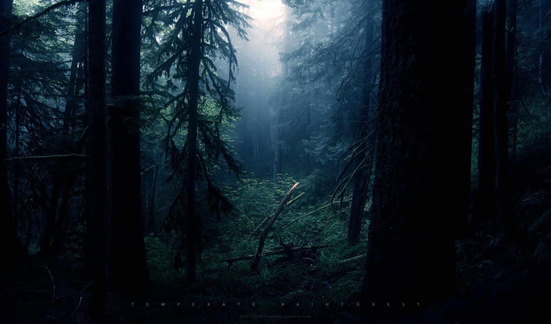 природа, дерево, качестве, количество, базе, деревья, pack, леса, нов,