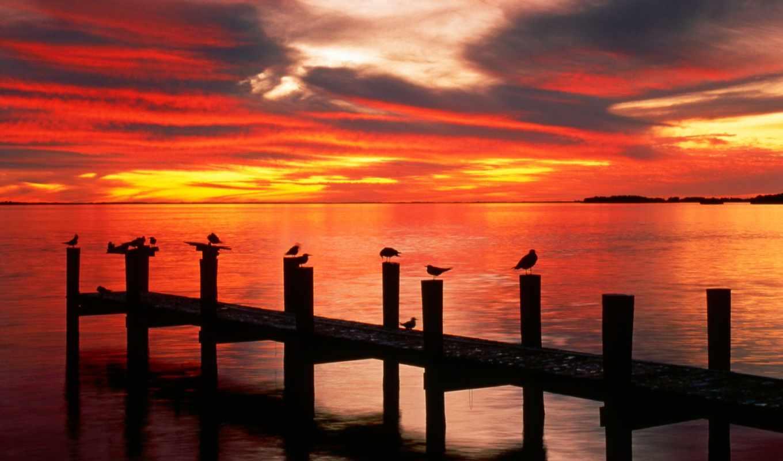iphone, landscape, закат, marco, seagulls, фото,