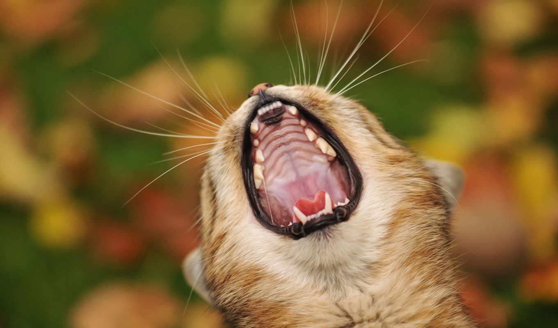 positive, настройся, смешные, пикабу, cats, фотоприколы, человека, жизни,