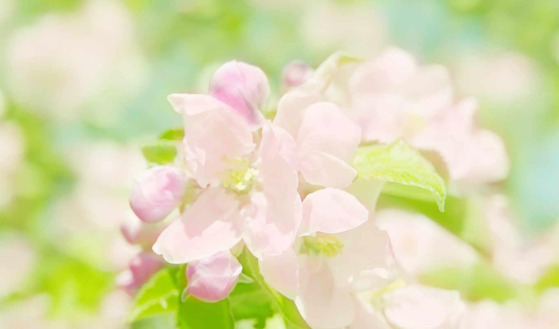 На компьютер обои-Нежные светлые цветы на фоне неба весны без ... | 800x1360