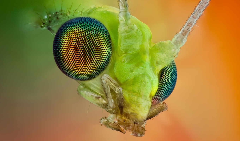 макро, мира, insect, насекомого, насекомые, голова, nature,