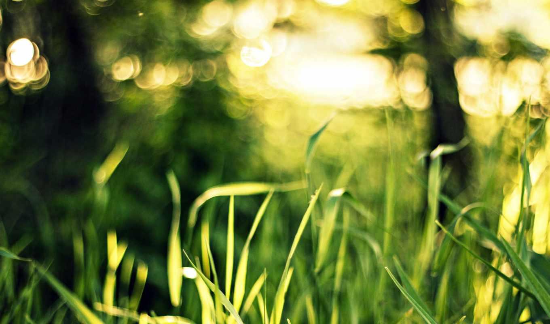 pictures, свет, природа, flowers, bokeh, зелёный, макро,