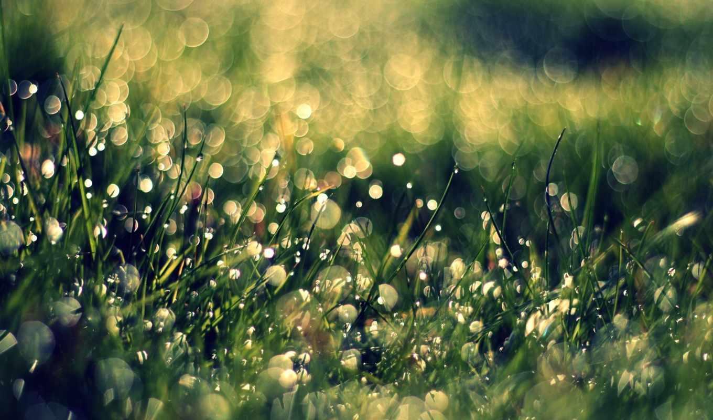 картинку, цветы, макро, капли, трава, цветов, телефон, телефона, сгула, бесплатную, mobilnogo,