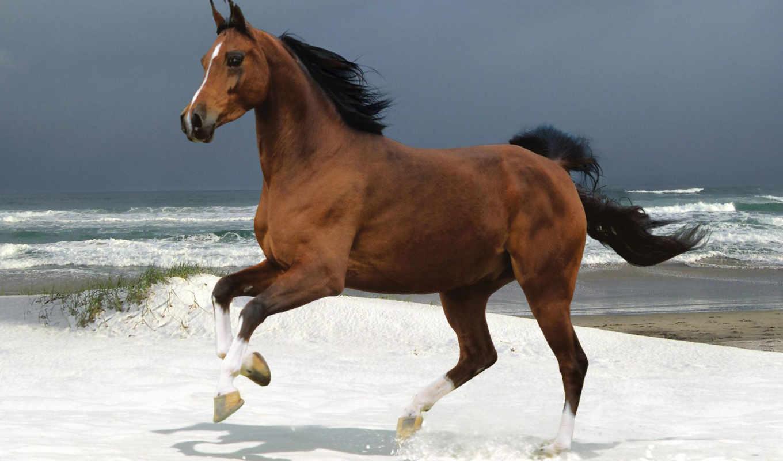 horses, лошадь, самый, world, pinterest, more, see, об, ideas, catalog,