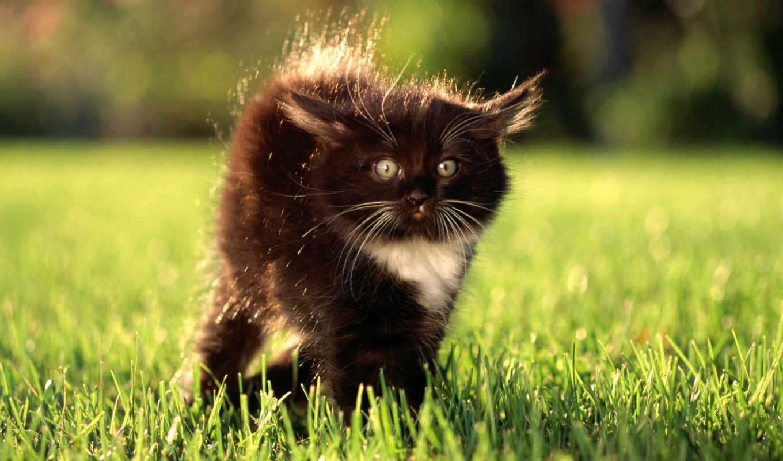 кошки, котенок, бесплатные, котята, обоях, коты, взгляд,