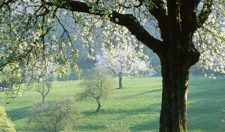 весна, красивый, смотреть,