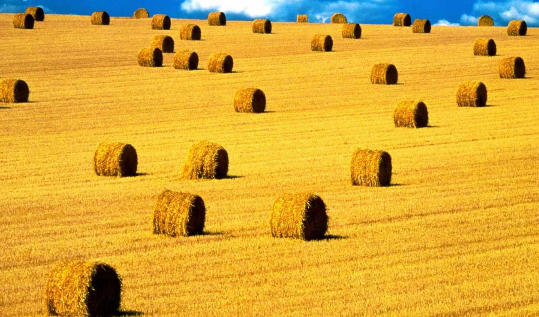 степи, луга, поля, мб, крыму,