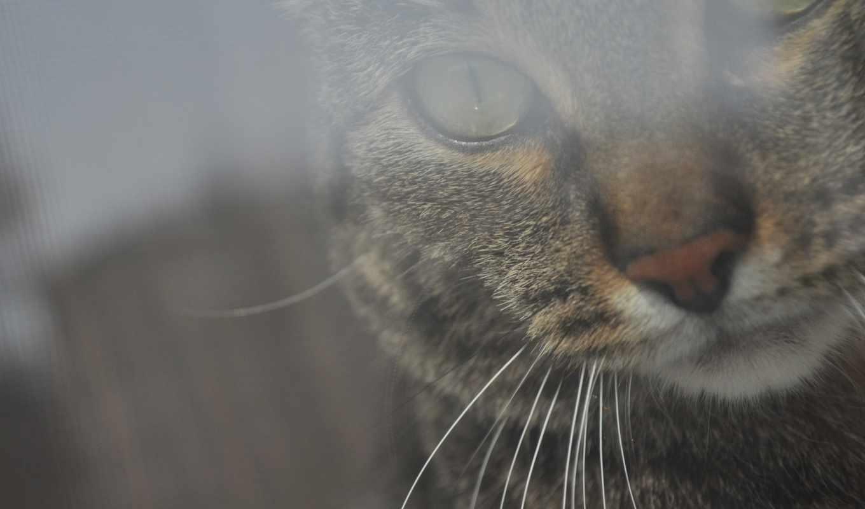 кошки, кот, избранные, добавить,