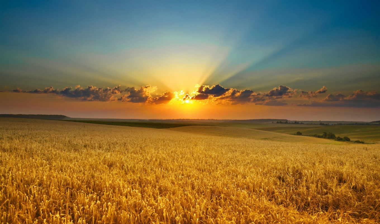 поле, закат, природа, облака, hoàng, красота, hơn, рассвет, солнце, утро, золото, лучи, hinh, колосья, đẹp, nen, фотографии, lên, bộ, июня,