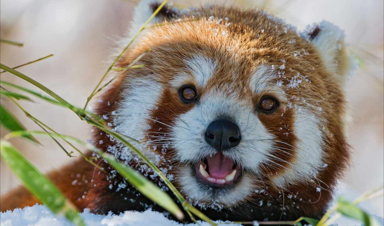 sur, 副标题, panda,