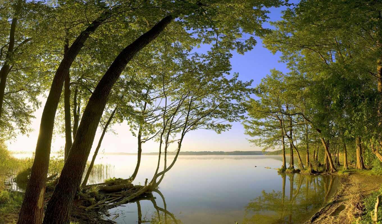 лес, озеро, природа, берег, заросший, les, деревья,