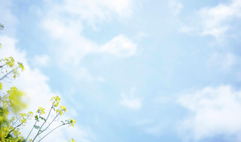 den, рождения, cvety, февр, красивых, картинок, девушек,