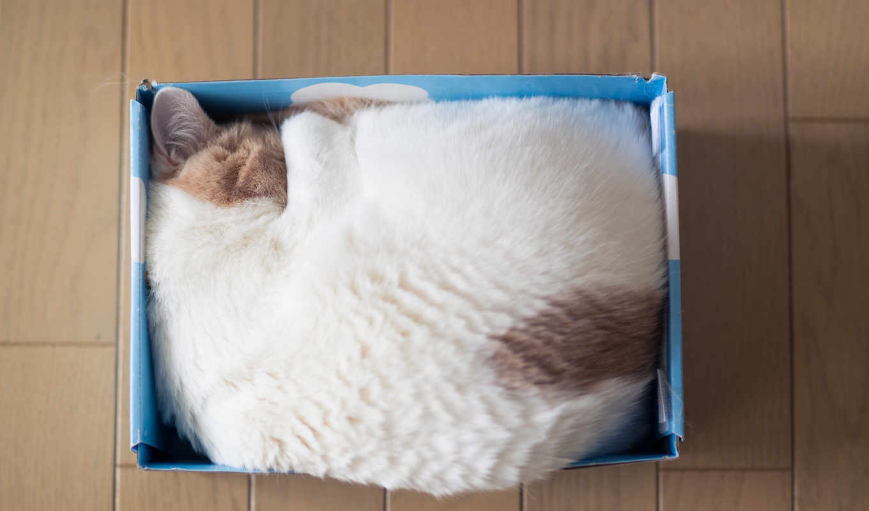 kittens, funny, кот, lgn, zhivotnye, источник,
