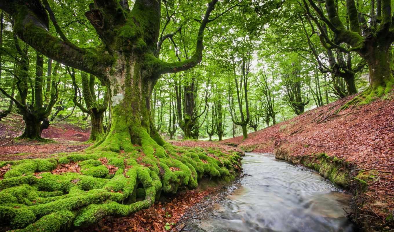 деревя, лес, красивые, природа, мох, река, испания,