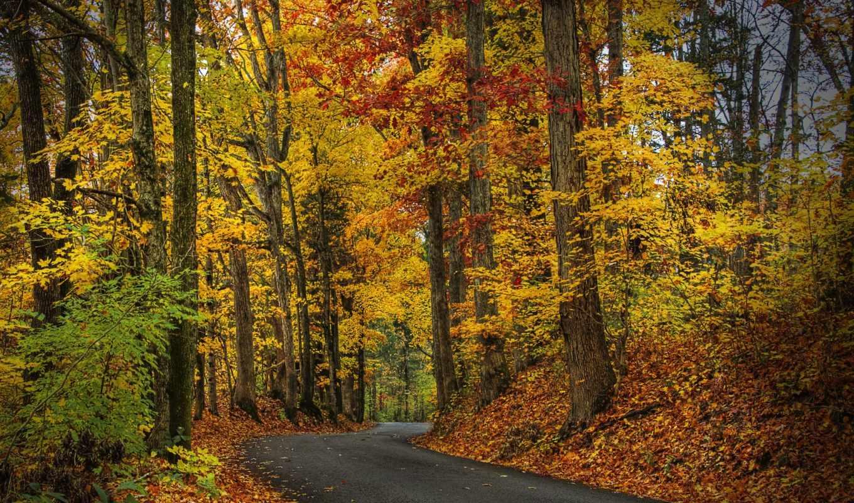 дорога, hdr, листва, листья, лес, trees, осенняя, park, осень, прогулка,