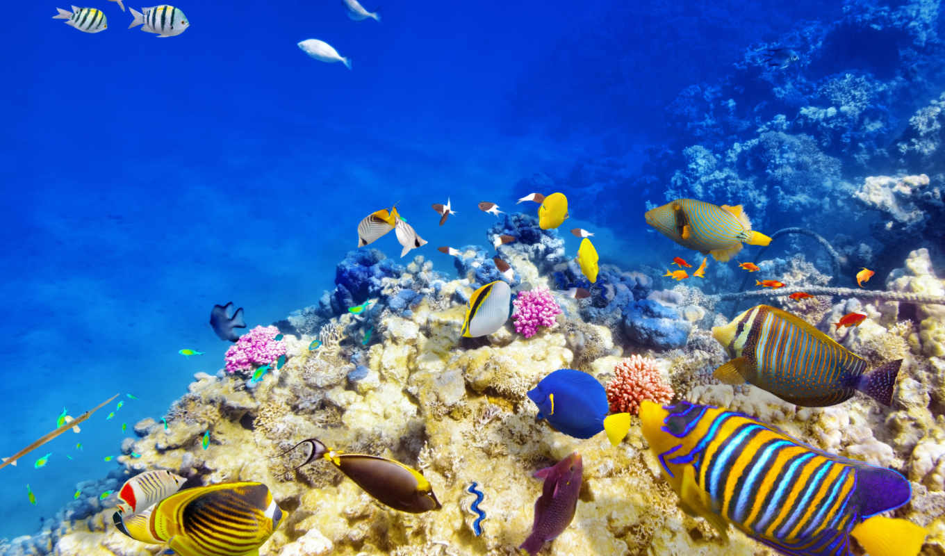 underwater, ocean, fish, world, coral, fishes, риф, рыбки,