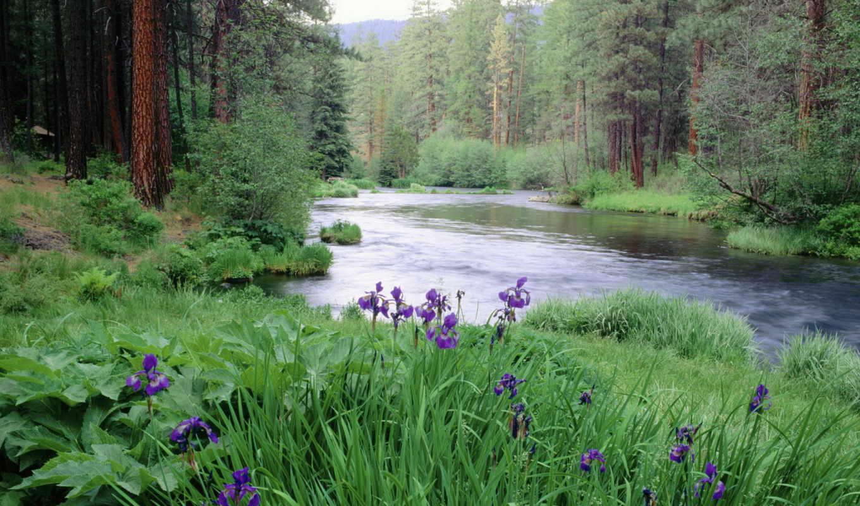 река, gif, one,