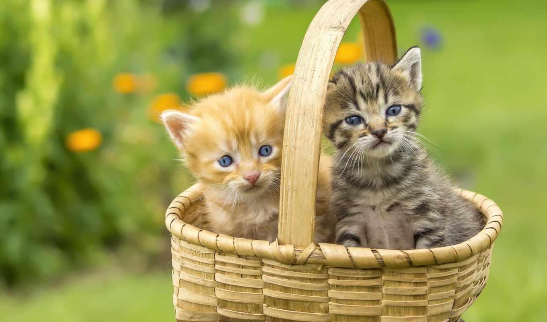 kittens, разрешениях, different, позитивище, корзинке, cats, коллекция,
