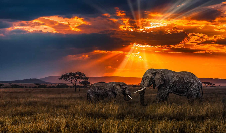 саванна, закат, слон, reply, африка, красивый, дерево, вечер