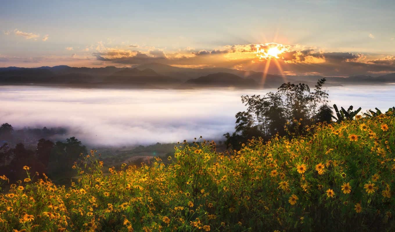 таиланд, пейзаж, цветы, природа, fog, doğa, природы, картинку,