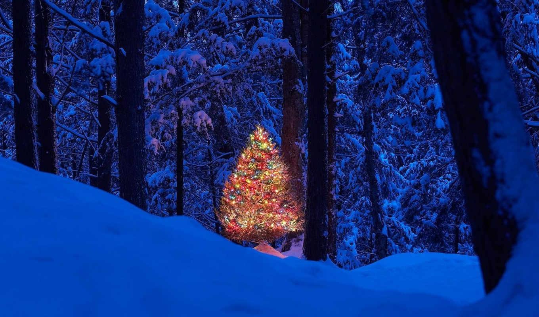 год, новый, лес, елка, картинка, christmas,