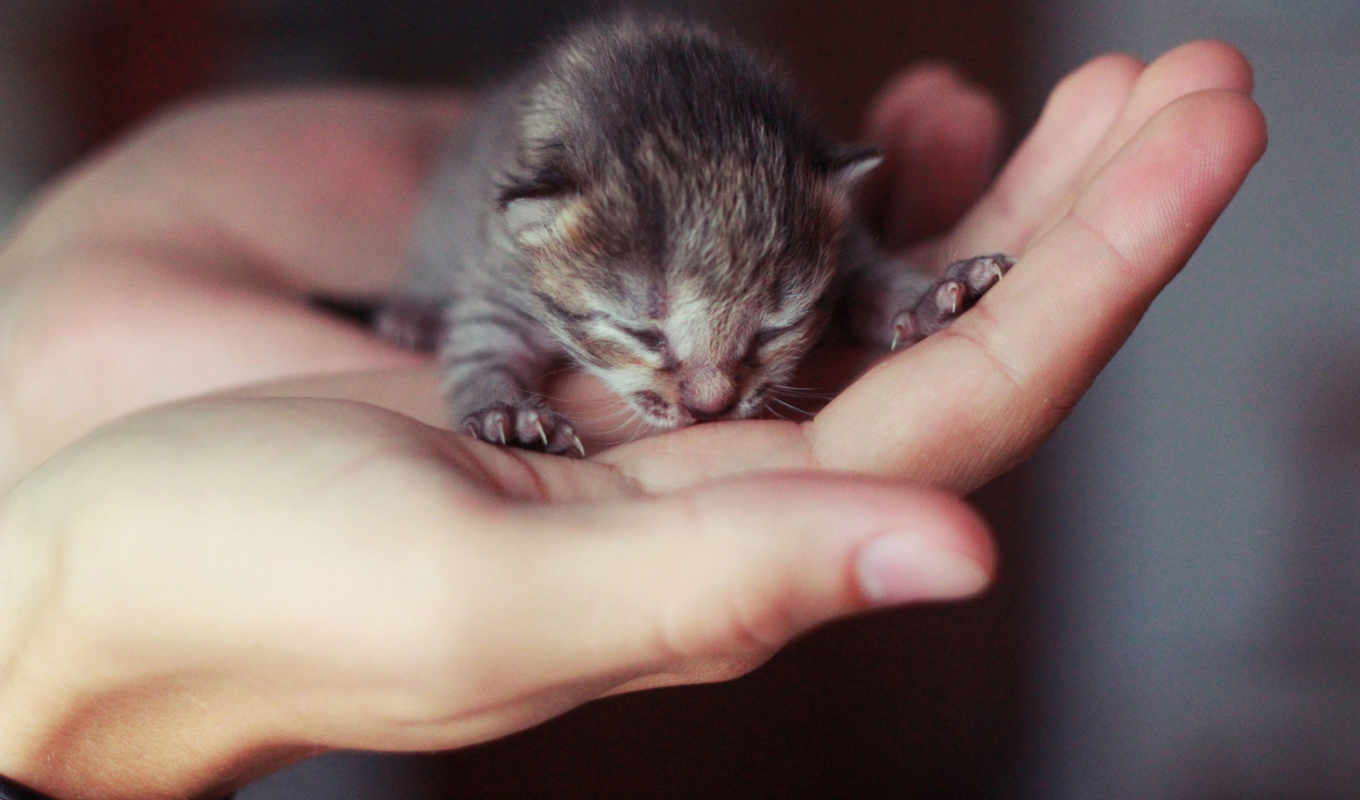 new, she, mixed, pack, hand, спящие, was, животные, нравится, baby, her, you, little, that, when, photo, sized, this, kitten,