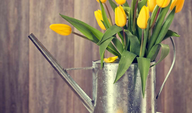 тюльпаны, желтые, images, весна, photos, stock,