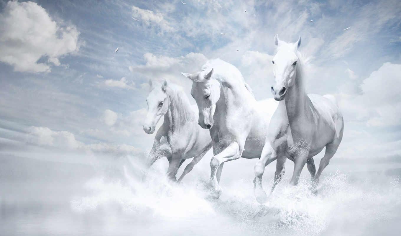 лошади, лошадей, zhivotnye, три, лошадь, белые,