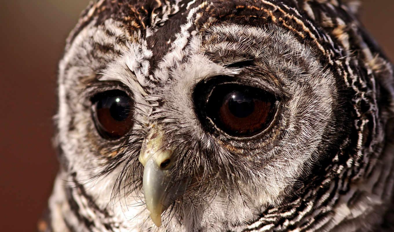 сова, грустная, красивые, свет, совы, грустные, птицы, птица, discover, грусть, развернуть,