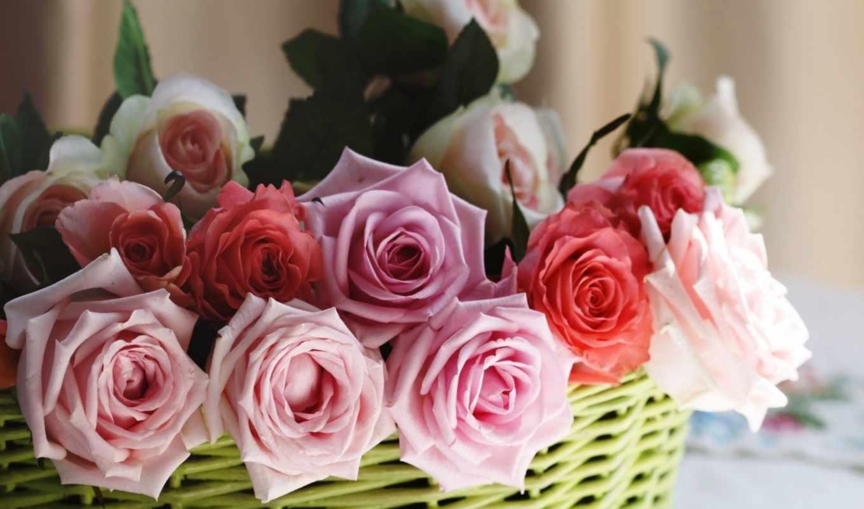 розы, цветы, корзина, совершенно, только, красивые, заставки, daily, дек,