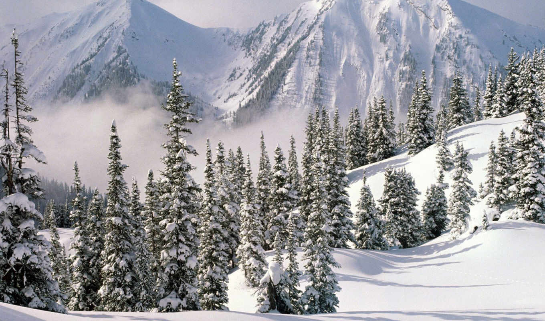winter, есть, снег, snowy, лес, мост, можно, эти,