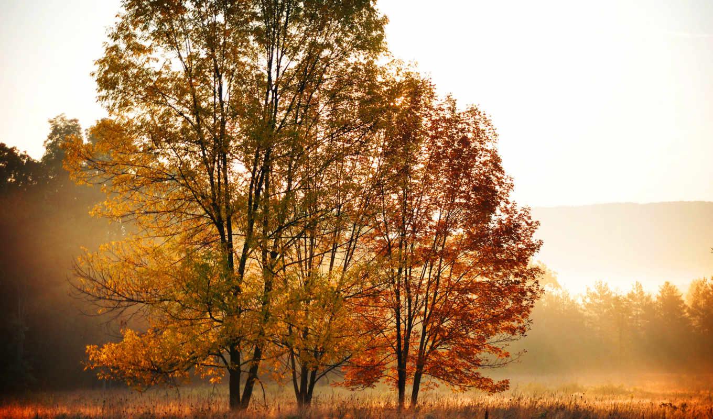 осень, листья, деревя, желтые, оранжевые, природа, лес,
