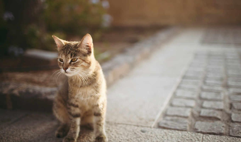 кот, кошки, асфальт, котенок, боке,
