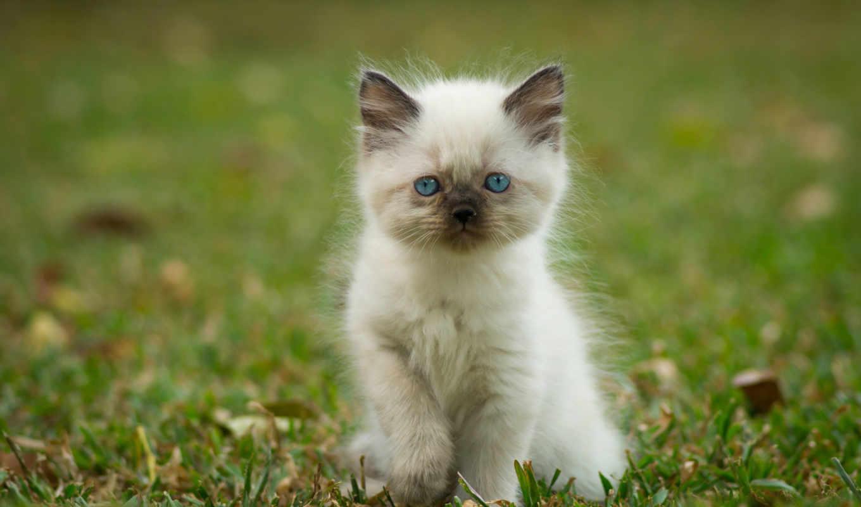 котенок, кошки, vzglyad, темы, iphone,